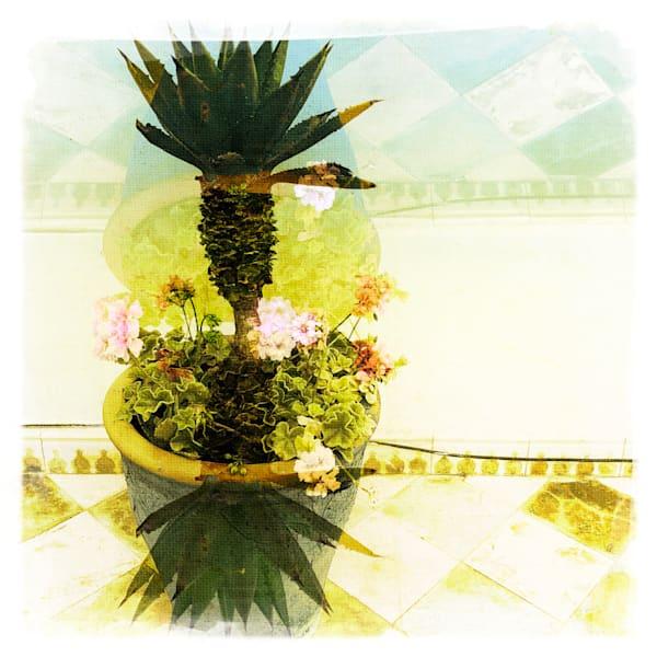 Plant Abstract Art   photographicsart