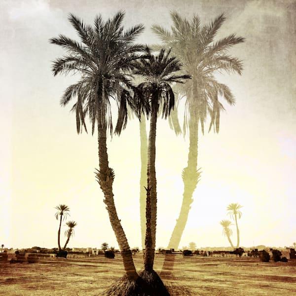 Imagining Palms Art   photographicsart