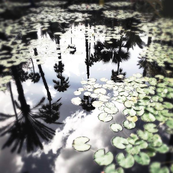 Majorelle Gardens Art   photographicsart