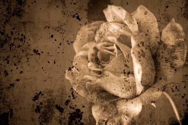 Vintage Rose Photography Art | Kathleen Messmer Photography