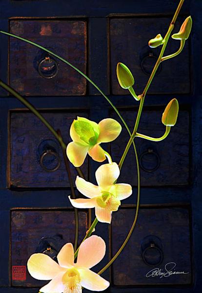 Archer's Bow Photography Art | cosimo scianna