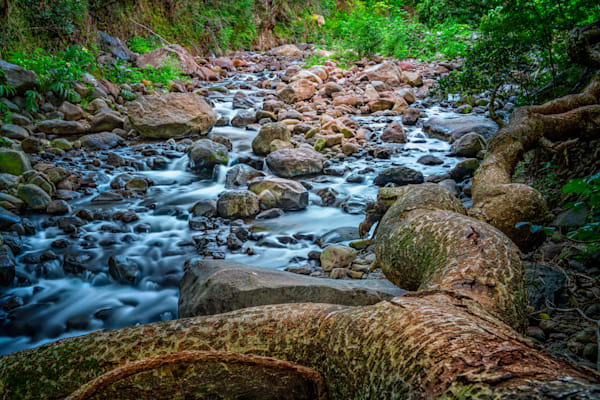 Stream with Roots, Ian Valley, Maui