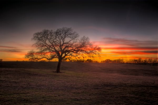 Landscape image of tree on rolling hills, outlined against red sunset sky, near Cameron, Texas