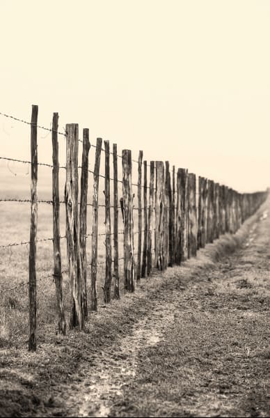 Vertical sepia toned image of barbed wire fence receding into the morning fog, Texas
