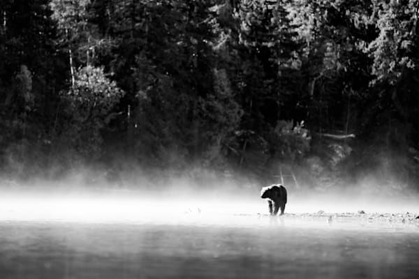 Grizzly Morning Mist, Central British Columbia