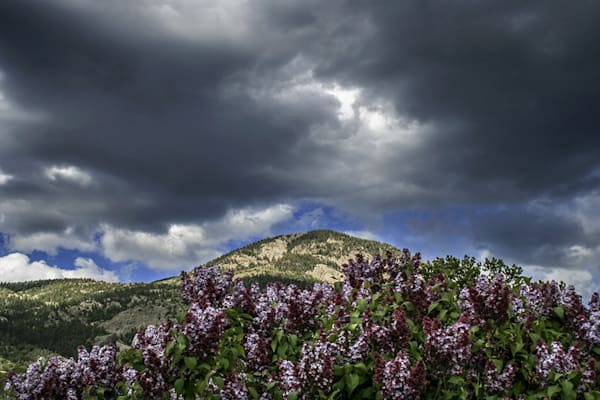El Salto With Lilacs Art | Fine Art New Mexico