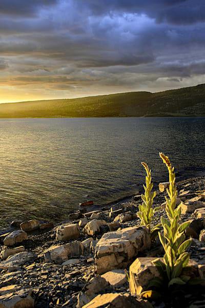 Heron Lake Art | Fine Art New Mexico