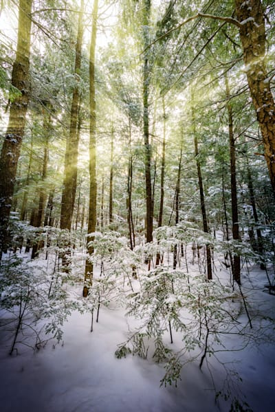 Winter Sunlight Through The Trees | Shop Photography by Rick Berk