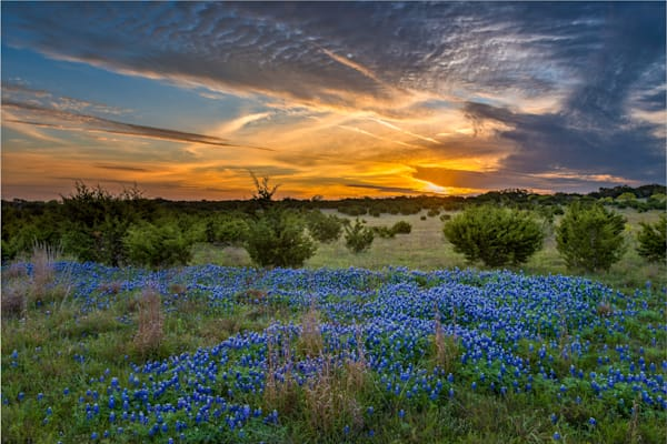 Bluebonnets at Sunrise 2, Texas Hill Country