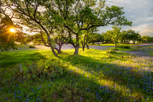 Bluebonnets at Sunrise 1, Texas Hill Country