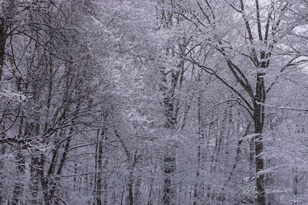 Winter Trees Photography Art | cosimo scianna