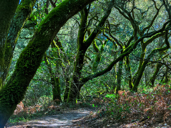 Central Coast Trail Photography Art | FocusPro Services, Inc.