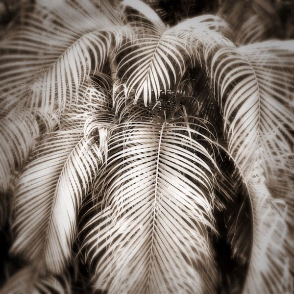 Palm Leaves 2 Art | photographicsart