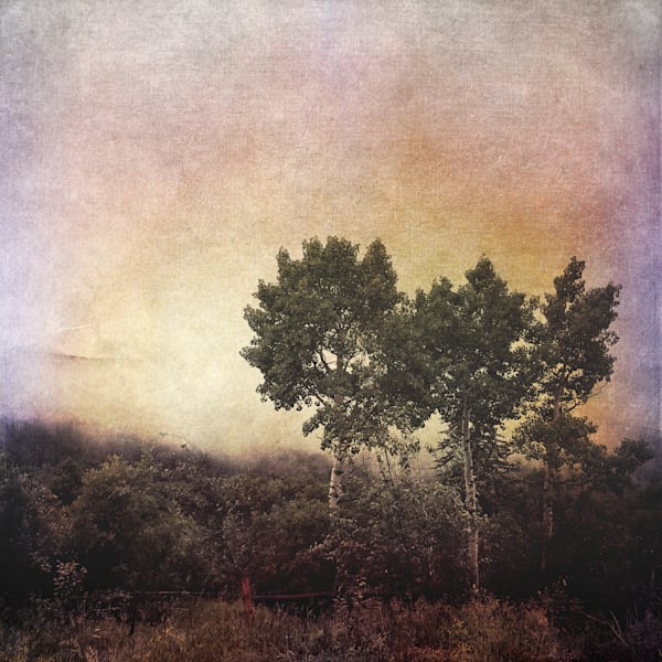 Three Aspens Art | photographicsart