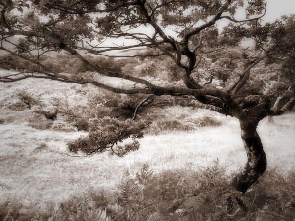 Tree 2 Sheeffrey Wood Art | photographicsart