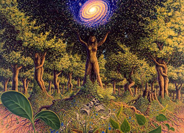 Tree Incarnation Canvas Giclee Art   markhensonart
