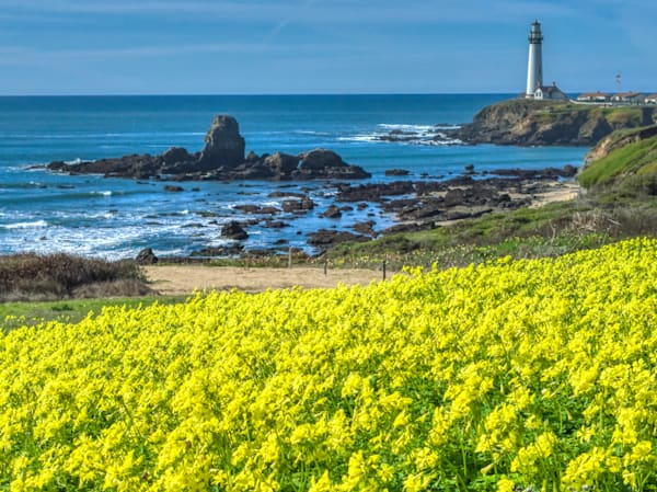 Pigeon Point Lighthouse Photography Art   FocusPro Services, Inc.