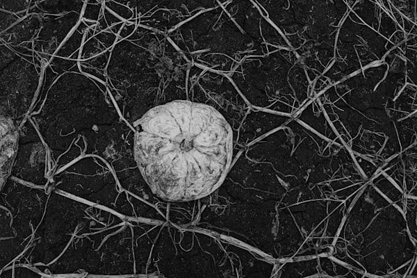 Earth Veins I - Nathan Larson Photography