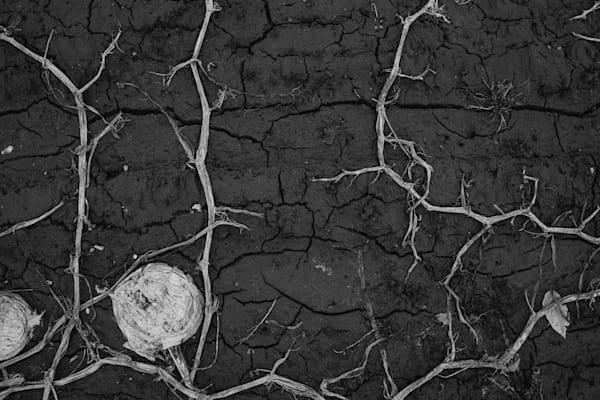 Earth Veins II - Black and White Fine Art Photography