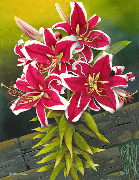 """Red Lilies"" fine art print by Jim Dolan."