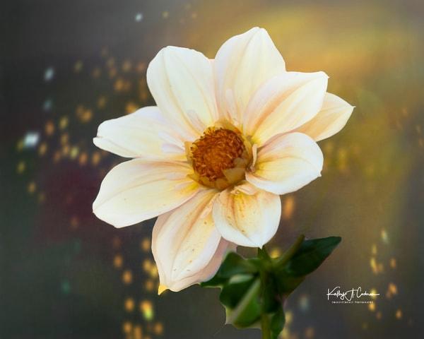 1122059 V2 Photography Art | Images2Impact