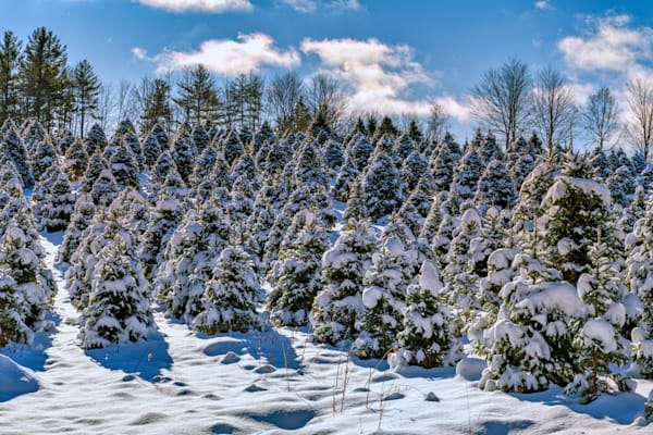 Snow on the Evergreens | Shop Photography by Rick Berk