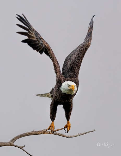 Wings Up - Eagles of the Keys