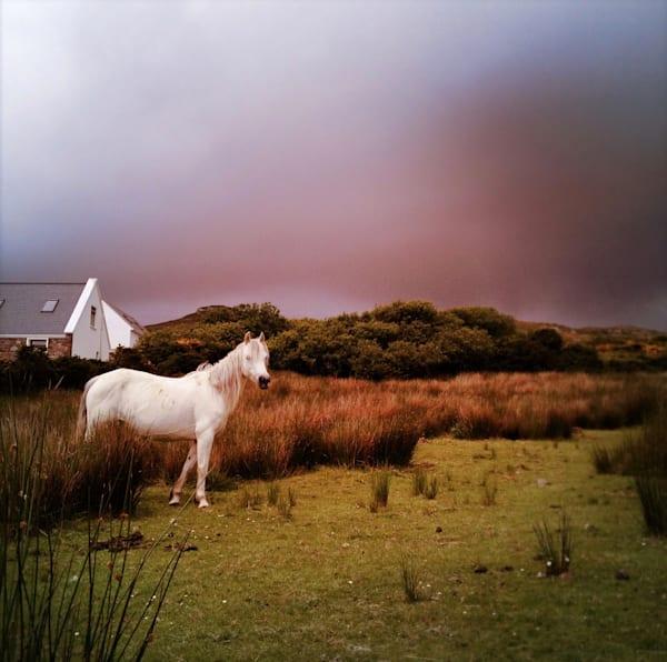 White Horse 2, Achill Island Art   photographicsart