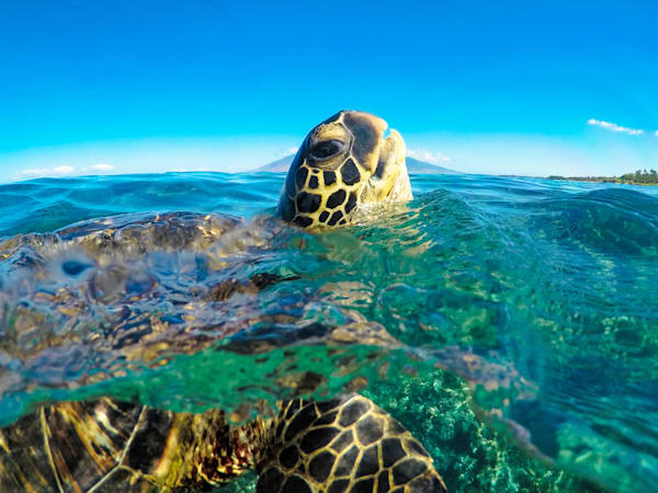 Color Me Maui