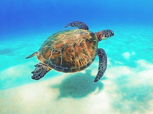 Friend of the Ocean