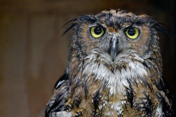 Owl Eyes Photography Art | artbysmiths
