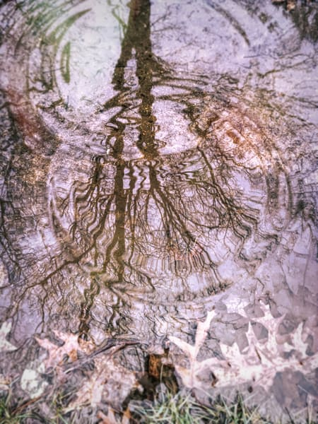 Winter Tree Reflection|Fine Art Photography prints for sale by Todd Breitling