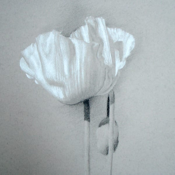 Poppy, White Silk Art | Cristina Goia