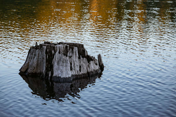 Stump and reflections, Fish Lake, Oregon