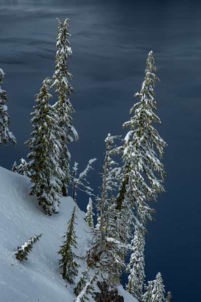 Trees in Winter, Crater Lake