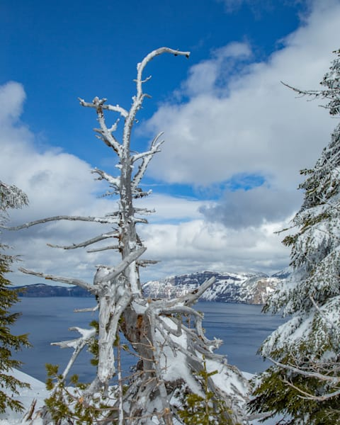Crater Lake Snag Photography Art | Lovere Photography