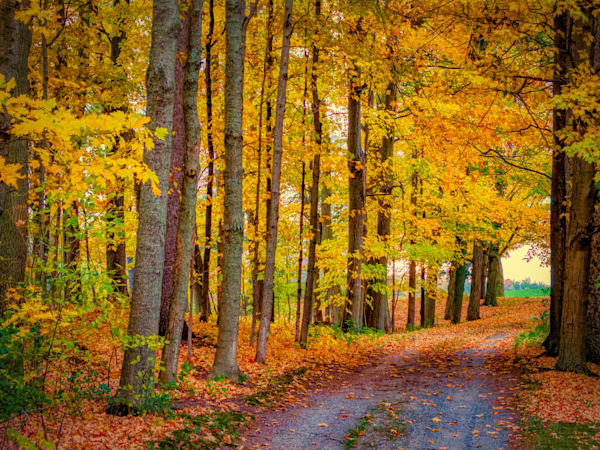 Fall Colors Driveway Photography Art   FocusPro Services, Inc.