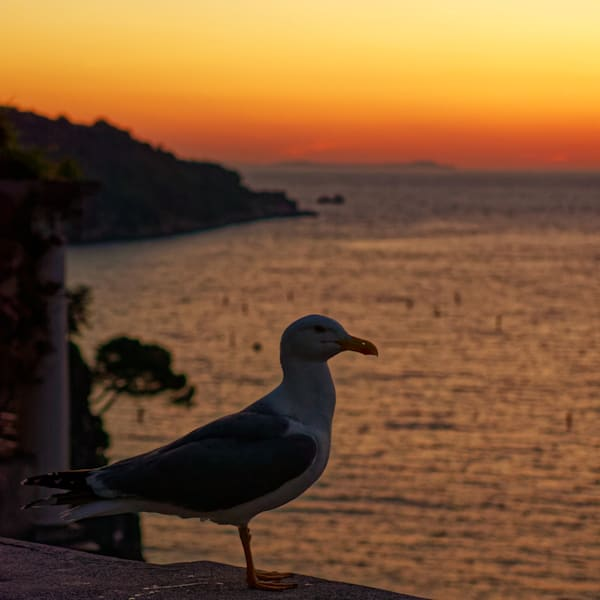 Sorrento Seagull Photography Art | FocusPro Services, Inc.