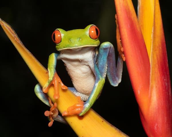 Costa Rican Cutie