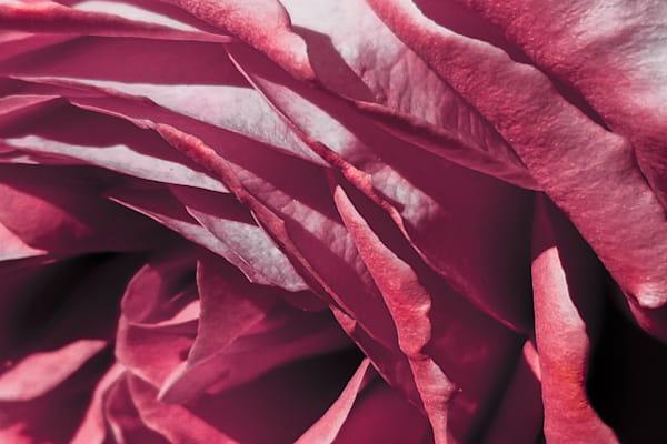 A Flower Named Rose