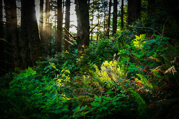 Primordial forest and ferns