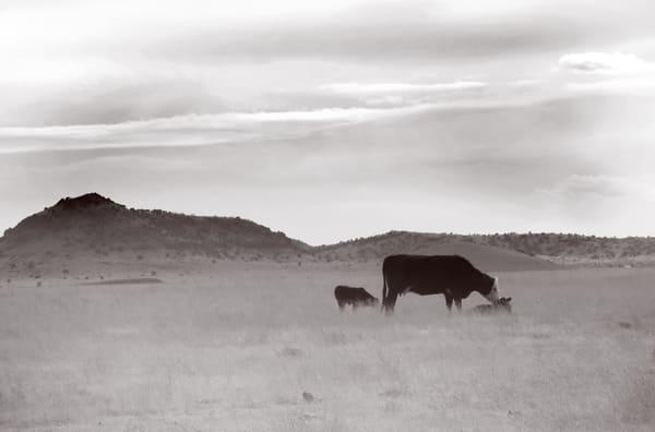 Momma & Her Babies Photography Art | Galeria Mañana