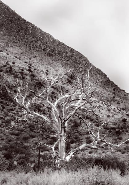 Lightning Strike Photography Art | Galeria Mañana