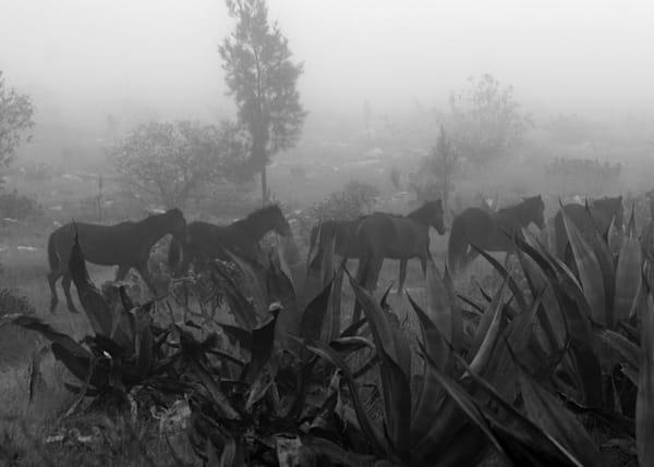 Horses In The Fog (Caballos En La Neblina) Photography Art | Galeria Mañana