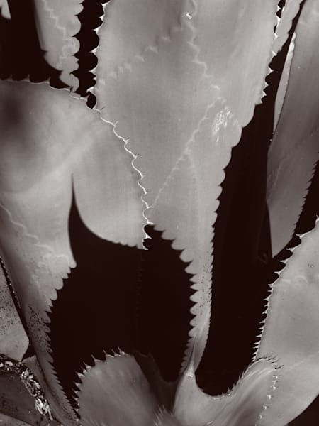Maguey Shadows Photography Art | Galeria Mañana