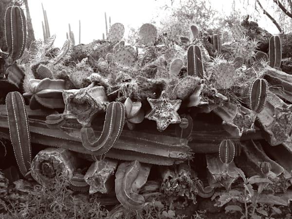 Stacked Organos Photography Art | Galeria Mañana