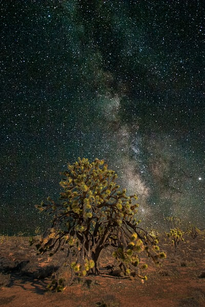 Milky Way and Joshua Tree in Arizona