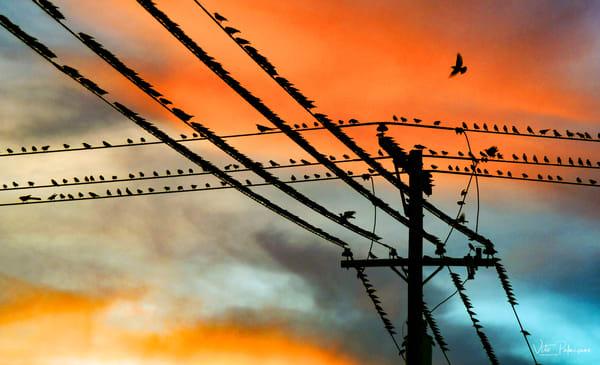 Bird S On Wire S Photography Art | vitopalmisano