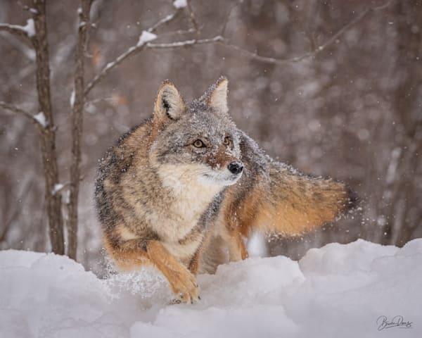 Coyote Ridge Photography Art | brucedanz