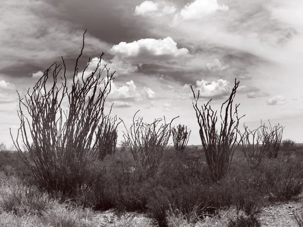 Ocotillo Sky Photography Art | Galeria Mañana